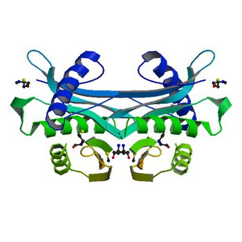 Crystal structure of putative acetyltransferase from Agrobacterium tumefaciens (2G3A)