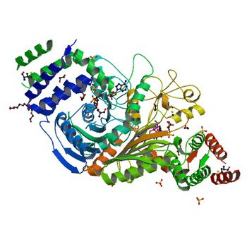 The structure of a putative malate/lactate dehydrogenase from E. coli. (2G8Y)