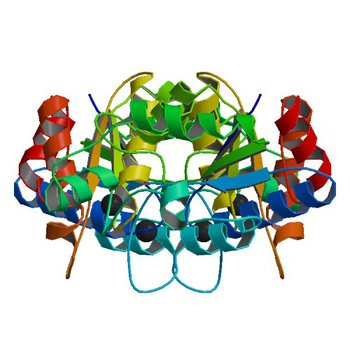 Crystal structure of dethiobiotin synthetase (bioD) from Helicobacter pylori (2QMO)