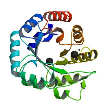 Crystal structure of a putative 4-hydroxy-2-oxoglutarate aldolase from Bacillus cereus (3N73)