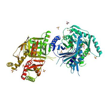 Crystal structure of putative 2,3-dihydroxybenzoate-specific isochorismate synthase, DhbC from Bacillus anthracis. (3OS6)
