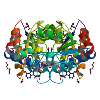 Crystal structure of dethiobiotin synthetase (BioD) from Helicobacter pylori complexed with ATP (3QXC)