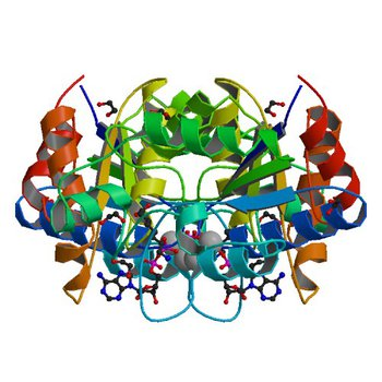 Crystal structure of dethiobiotin synthetase (BioD) from Helicobacter pylori complexed with ADP and 8-aminocaprylic acid (3QXH)
