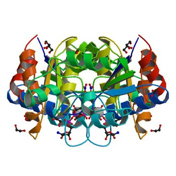 Crystal structure of dethiobiotin synthetase (BioD) from Helicobacter pylori complexed with GTP (3QXJ)