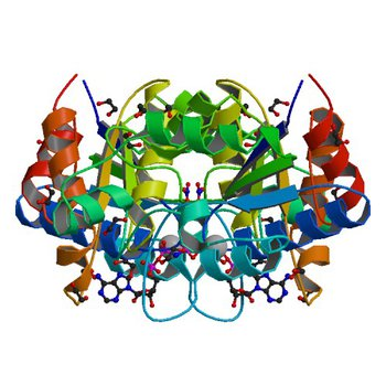 Crystal structure of dethiobiotin synthetase (BioD) from Helicobacter pylori complexed with ANP (3QXS)