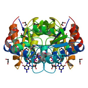 Crystal structure of dethiobiotin synthetase (BioD) from Helicobacter pylori complexed with GDP and 8-aminocaprylic acid (3QXX)