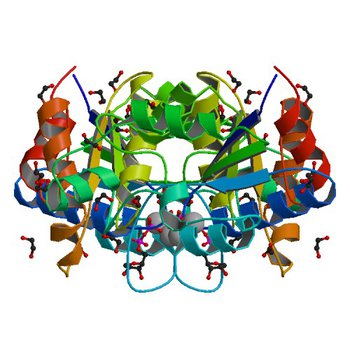 Crystal structure of dethiobiotin synthetase (BioD) from Helicobacter pylori complexed with GDP (3QY0)