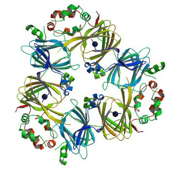 Crystal structure of Ara h 1 (3S7I)