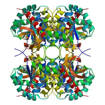 Crystal structure of Bacillus anthracis str. Ames malate dehydrogenase in closed conformation. (3TL2)