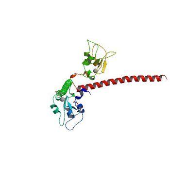 Crystal structure of human Survivin K62A mutant (3UEG)