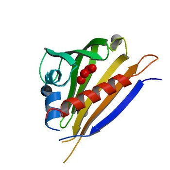 Crystal structure of kirola (Act d 11) from crystal soaked with serotonin (4IH0)