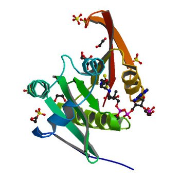 Crystal structure of a GNAT superfamily acetyltransferase PA4794 in complex with CoA (4KUB)