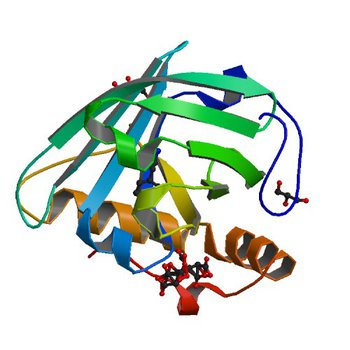 Structural re-examination of native Bla g 4 (4N7C)