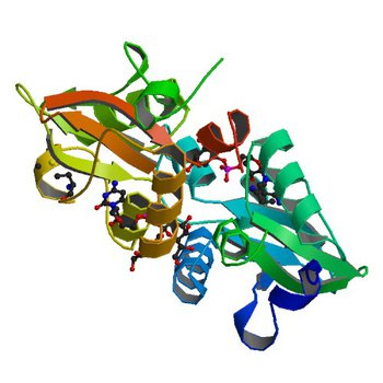 Crystal structure of the CBS pair of a putative D-arabinose 5-phosphate isomerase from Methylococcus capsulatus in complex with CMP-Kdo (4O9K)