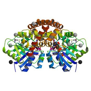 Crystal structure of cyclohexadienyl dehydrogenase from Sinorhizobium meliloti in complex with NADP and tyrosine (4WJI)