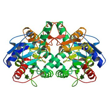 Crystal structure of D-isomer specific 2-hydroxyacid dehydrogenase from Xanthobacter autotrophicus Py2 (4XA8)