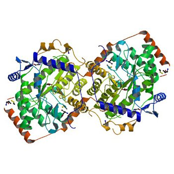 Crystal structure of trimethylamine methyltransferase from Sinorhizobium meliloti in complex with unknown ligand (4YYC)