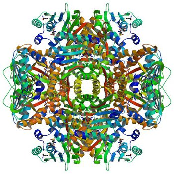 Crystal structure of SAM-dependent methyltransferase from Thiobacillus denitrificans in complex with S-Adenosyl-L-homocysteine (5EPE)