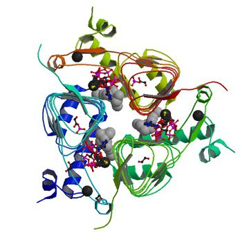 Crystal structure of Galactoside O-acetyltransferase complex with CoA (P32 space group). (5V0Z)