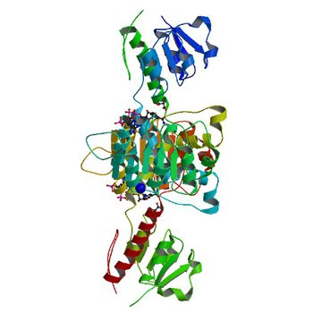 Crystal structure of NADPH-dependent glyoxylate/hydroxypyruvate reductase SMc04462 (SmGhrB) from Sinorhizobium meliloti in complex with NADP and malonate (5V6Q)