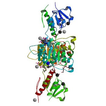 Crystal structure of NADPH-dependent glyoxylate/hydroxypyruvate reductase SMc04462 (SmGhrB) from Sinorhizobium meliloti in complex with NADP and 2-Keto-D-gluconic acid (5V7N)